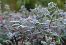 Photo of Гидрометцентр прогнозирует заморозки в некоторых российских регионах»