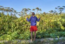 Photo of Самый опасный сорняк. 7 ошибок в борьбе с борщевиком»