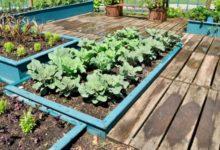 Photo of Как спасти сад и огород от потопа?»