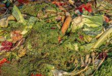 Photo of Стоит ли подкармливать растения отходами?»