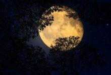 Photo of Лунный календарь садовода иогородника с 9 по 22 июня»