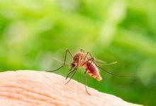 Photo of Комариный бум. Пять важных фактов про кровососов»