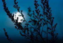 Photo of Лунный календарь садовода иогородника с 23 июня по 6 июля»