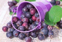 Photo of Северный изюм. Почему иргу сравнивают с виноградом?»