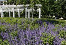 Photo of Из городского сада– на6соток. Какие приёмы используются в саду им. Баума»