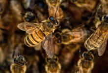 Photo of Почему в России второй год гибнут пчёлы?»