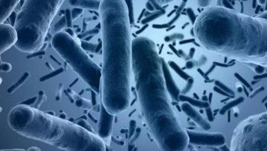 Photo of Что за антибиотик иррезистин?»