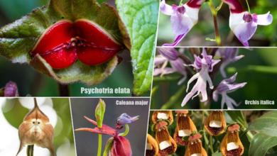 Photo of Какие необычные цветы существуют в мире?»