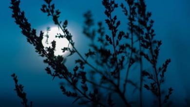 Photo of Энергия космоса. Чем биодинамический календарь отличается от лунного?»