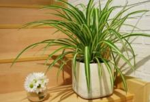 Photo of Какое комнатное растение подойдёт для юных натуралистов?»