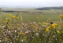 Photo of Гидрометцентр рассказал о погоде в европейской части России в июне»