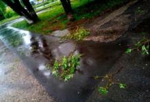 Photo of В Москве ветер повалил около 80 деревьев за два дня»