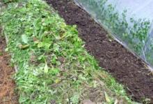 Photo of Как осушить землю на участке?