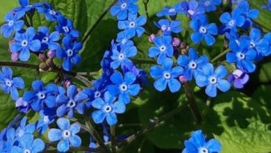 Photo of Цветущая весна. Как посетить Ботанический сад и Аптекарский огород онлайн?