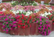 Photo of Люксовый вальс спетунией. Создаём композиции с прекрасным цветком.