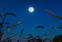 Photo of Лунный календарь садовода иогородника с 23 марта по 14 апреля.
