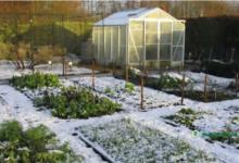Photo of Подготовка сада к зимнему периоду