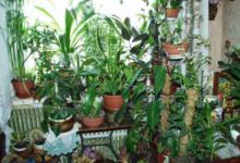Photo of Как выбрать комнатное растение?