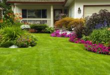 Photo of Как посадить газонную траву.