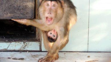 Photo of Как животные относятся к алкоголю?»