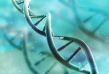 Photo of Зачем вРФ создают банк генетической информации?»