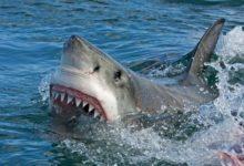 Photo of Любят ли акулы людей? Шесть главных мифов о подводных «монстрах»»