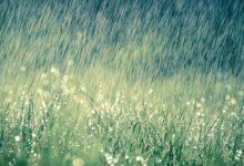 Photo of Сколько стоит вызвать дождь?»