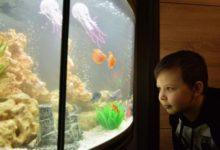 Photo of Не опасно размещать в спальне аквариум с рыбками?»