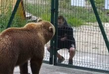 Photo of Зачем медведю Мансуру плюнули в морду?»