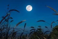 Photo of Лунный календарь садовода иогородника с 21 июля по 9 августа»