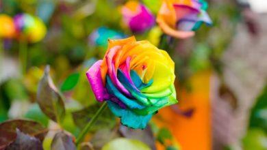 Photo of От радужной розы до грибной фермы. Топ-7 обманок длядачников»