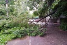 Photo of Ветер повалил 75 деревьев в Санкт-Петербурге»