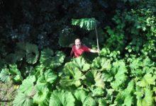 Photo of Как сделать, чтобы трава на участке росла медленней?»