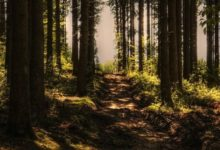 Photo of За 30 лет на Земле исчезли леса на территории размером с Ливию»