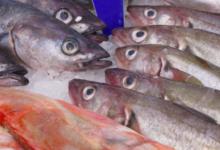 Photo of В Калининградской области задержали ловивших рыбу браконьеров»
