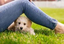 Photo of Могут ли дети выгуливать собак?»