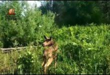 Photo of В Красноярском крае спасли тонущего лосенка»