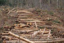 Photo of «Съесть» русский лес. Почему заповедники превращаются в свалки древесины?»