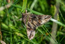 Photo of 7 совок. Чем опасны ночные бабочки и как с ними бороться?»