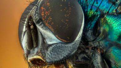 Photo of Австралийские учёные назвали новые виды мух в честь героев вселенной Marvel»