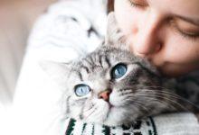 Photo of Когда появится переводчик языка животных?»