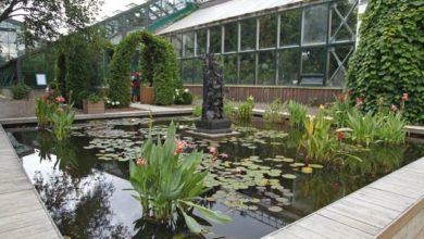 Photo of «Аптекарский огород». Как создать ботанический сад на даче»
