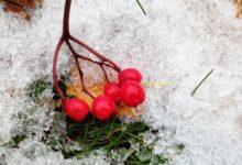 Photo of В самом северном городе России выпал снег»
