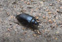 Photo of Что за редких «краснокнижных» жуков нашли в парке Москвы?»