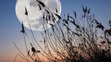 Photo of Лунный календарь садовода иогородника с 10 по 25 августа»