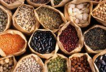 Photo of Как юннату собрать семена для следующего года?»