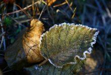 Photo of В нескольких регионах РФ ожидаются ночные заморозки»