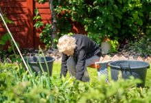 Photo of Прополка в радость. Как облегчить работу в огороде»