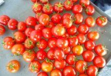 Photo of Что лечит помидор?»