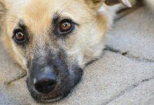 Photo of Чем нельзя кормить собак?»